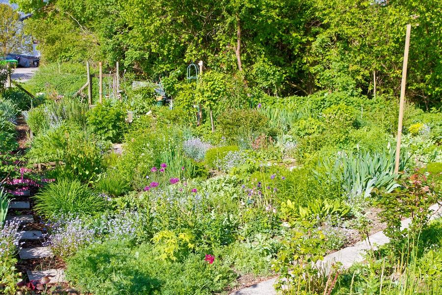 Natrlicher Bauerngarten im Frhling